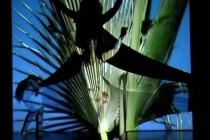 Opéra blanc, migration du papillon