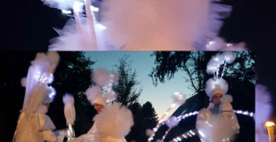 échassiers blancs